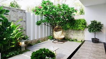 Bật mí cho bạn những cây ăn quả nên trồng trong sân nhà.